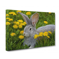 Rabbit in Grass Box Canvas Print Wall Art - Choice of Sizes
