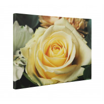 Yellow Rose Box Canvas Print Wall Art - Choice of Sizes