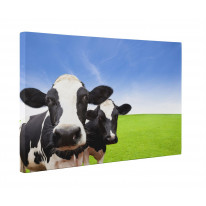 Cow Herd Box Canvas Print Wall Art - Choice of Sizes