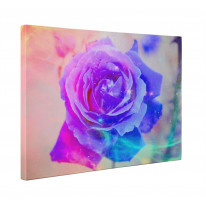 Abstract Rose Box Canvas Print Wall Art - Choice of Sizes