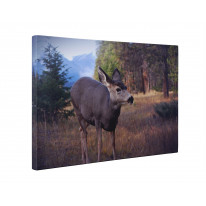 Deer in Woodland Box Canvas Print Wall Art - Choice of Sizes