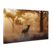Stag in Forest Box Canvas Print Wall Art - Choice of Sizes