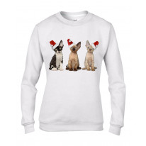 Three Kittens with Santa Claus Hats Christmas Women's Jumper \ Sweater