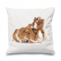 Guinea Pig Family Scatter Cushion