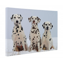 Three Dalmatian Dogs In The Snow Canvas Print Wall Art - Choice Of Sizes