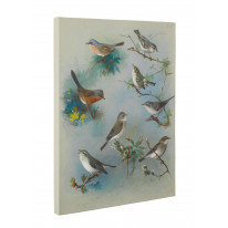 Archibald Thorburn Warbler and Wrens Box Canvas Print Wall Art - Choice of Sizes