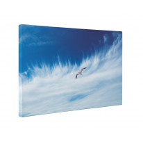Seagull in Sky Box Canvas Print Wall Art - Choice of Sizes