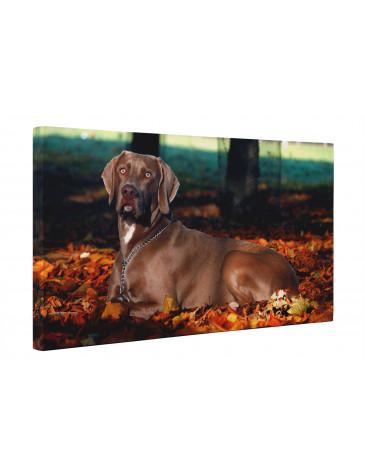 Weimaraner Dog In Autumn Forest Canvas Print Wall Art - Choice Of Sizes