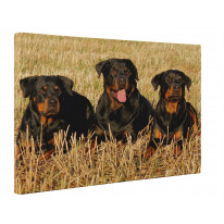 Three Rottweiler Dogs In A Field Canvas Print Wall Art - Choice Of Sizes