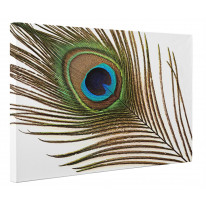 Single Peacock Feather Box Canvas Print Wall Art - Choice of Sizes
