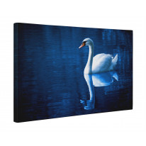 Swan on Blue Lake Box Canvas Print Wall Art - Choice of Sizes
