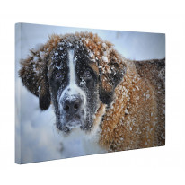 St. Bernard Dog In The Snow Canvas Print Wall Art - Choice Of Sizes