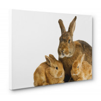 Mother Rabbit Canvas Print Wall Art - Choice Of Sizes