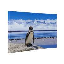 Penguin Antarctic Landscape Box Canvas Print Wall Art - Choice of Sizes