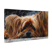Yorkshire Terrier Face Canvas Print Wall Art - Choice Of Sizes Print Wall Art - Choice Of Sizes