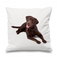 Chocolate Labrador Scatter Cushion