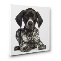 German Short Haired Pointer Box Canvas Print Wall Art - Choice of Sizes
