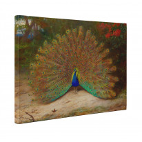 Archibald Thorburn Peacock and Peacock Butterfly Box Canvas Print Wall Art - Choice of Sizes
