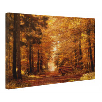 Forest Path in Autumn Box Canvas Print Wall Art - Choice of Sizes