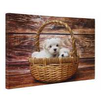 Maltese Terriers in a Basket Box Canvas Print Wall Art - Choice of Sizes