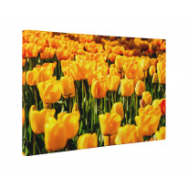 Yellow Tulips Box Canvas Print Wall Art - Choice of Sizes