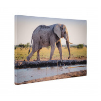Elephant at Watering Hole Box Canvas Print Wall Art - Choice of Sizes