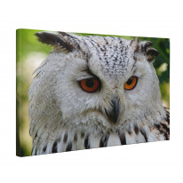 Eagle Owl Face Light Background Box Canvas Print Wall Art - Choice of Sizes