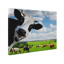 Cow Funny Box Canvas Print Wall Art - Choice of Sizes