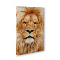 Lion Face Box Canvas Print Wall Art - Choice of Sizes