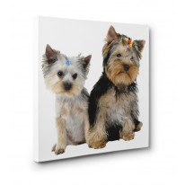 Yorkshire Terrier Pups Box Canvas Print Wall Art - Choice of Sizes