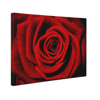 Red Rose Box Canvas Print Wall Art - Choice of Sizes