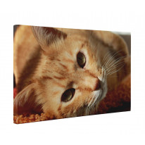 Ginger Cat Lying Down Box Canvas Print Wall Art - Choice of Sizes