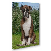 Boxer Dog in Grass Box Canvas Print Wall Art - Choice of Sizes