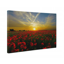 Poppy Field Sunset Box Canvas Print Wall Art - Choice of Sizes