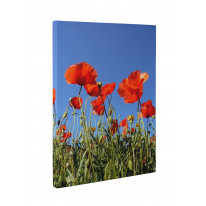 Poppy Field Blue Sky Box Canvas Print Wall Art - Choice of Sizes