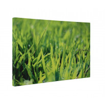 Blades of Grass with Dew Box Canvas Print Wall Art - Choice of Sizes
