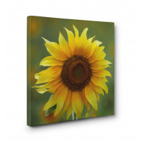 Sunflower Box Canvas Print Wall Art - Choice of Sizes