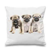 Pug Puppies Scatter Cushion