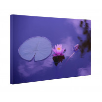 Lotus Water Lily Purple Background Box Canvas Print Wall Art - Choice of Sizes