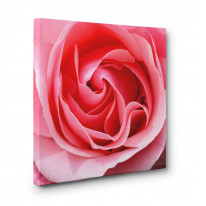 Pink Rose Box Canvas Print Wall Art - Choice of Sizes