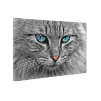 Grey Cat with Blue Eyes Box Canvas Print Wall Art - Choice of Sizes