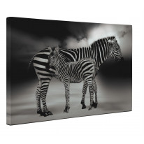 Zebra with Baby Box Canvas Print Wall Art - Choice of Sizes