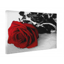 Red Rose on Table Box Canvas Print Wall Art - Choice of Sizes
